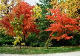 Деревья с декоративно окрашенной