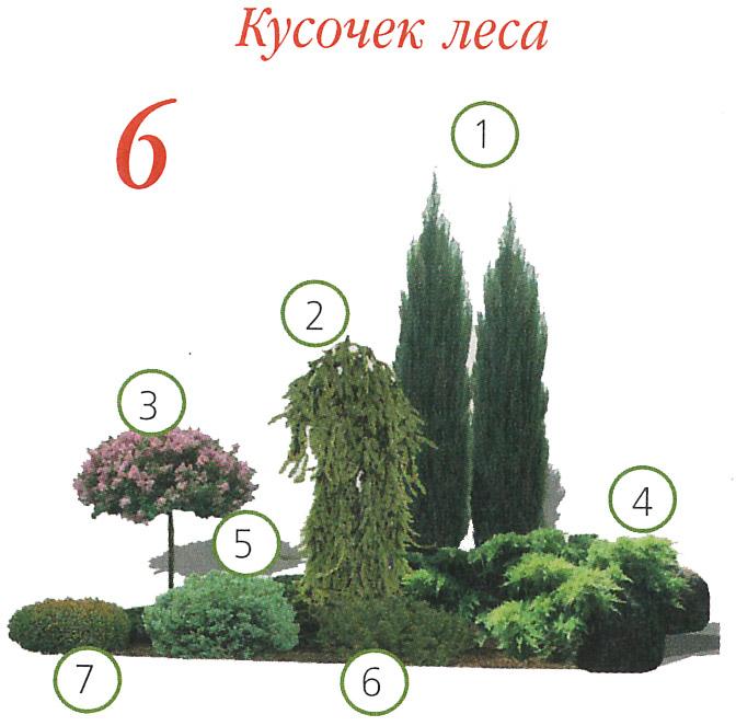 Почвопокровные многолетники растения, цветущие все лето