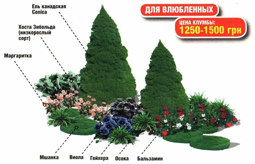 Клумбы с цветами и хвойными растениями