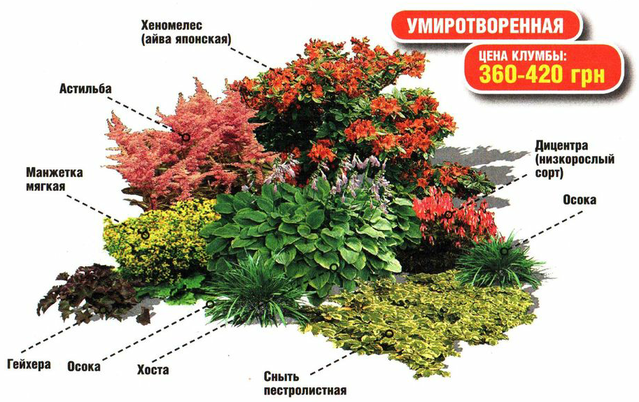 Тенелюбивые растения в саду фото