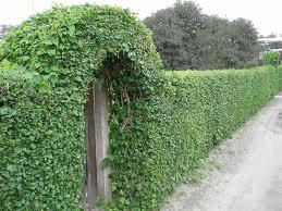зеленая арка своими руками
